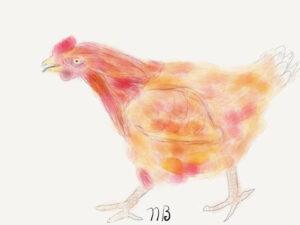 neal_chicken